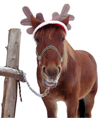 christmas-horse-2-isolation-1360789
